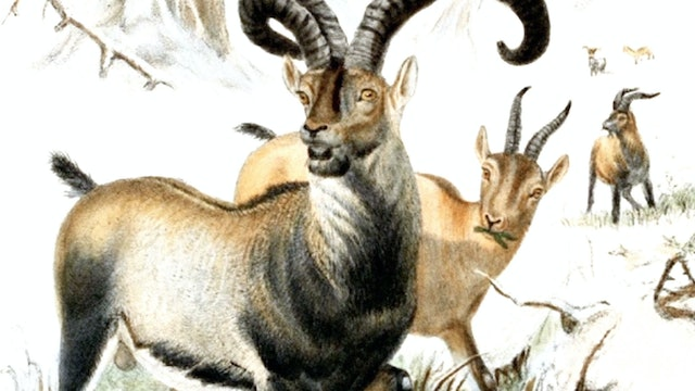 Resurrection Biology | How to Bring Animals Back From Extinction
