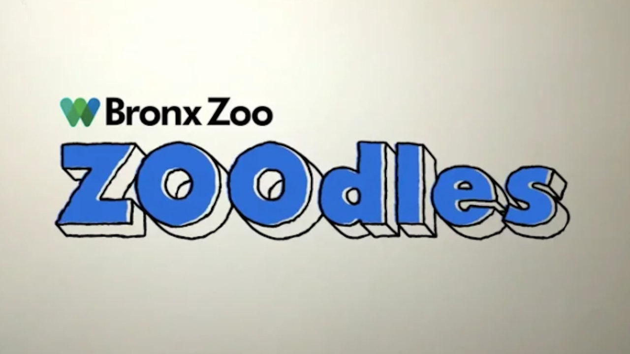 Bronx Zoo - Zoodles