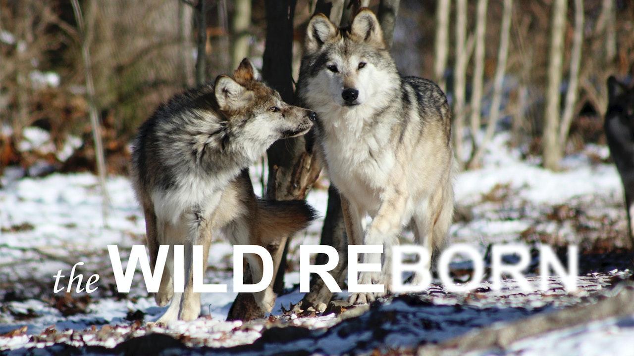The Wild Reborn