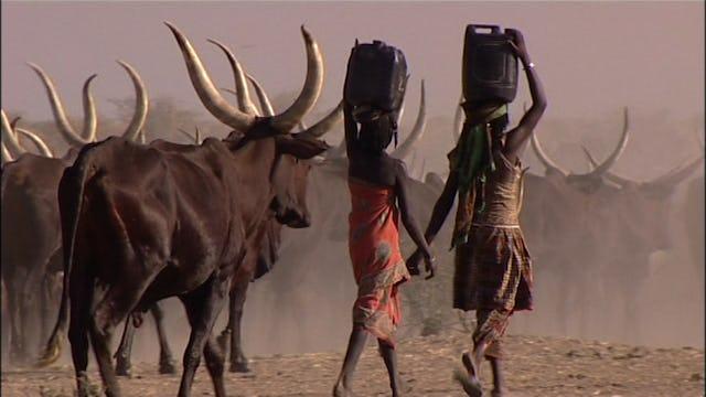 The Fulani Shepherds