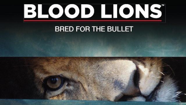 Blood Lions