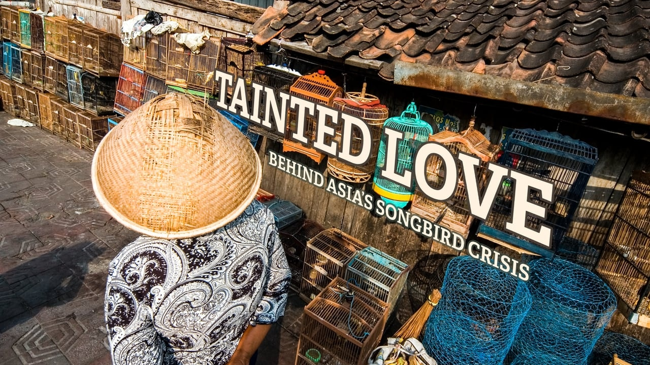 Tainted Love: Behind Asia's Songbird Crisis