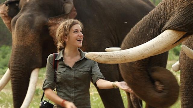 Crushing Illegal Ivory