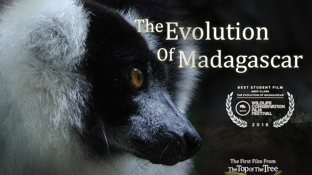 The Evolution of Madagascar