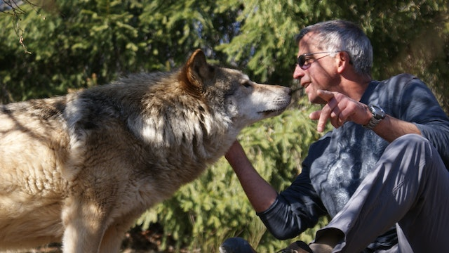 Wolves and Men