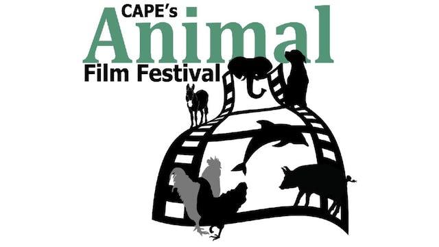 (CAPE's) Animal Film Festival