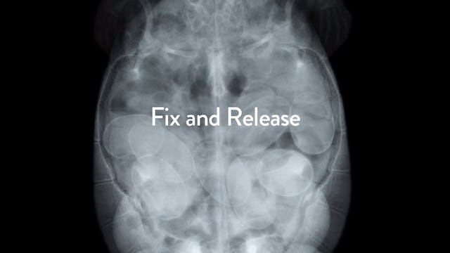 Fix and Release