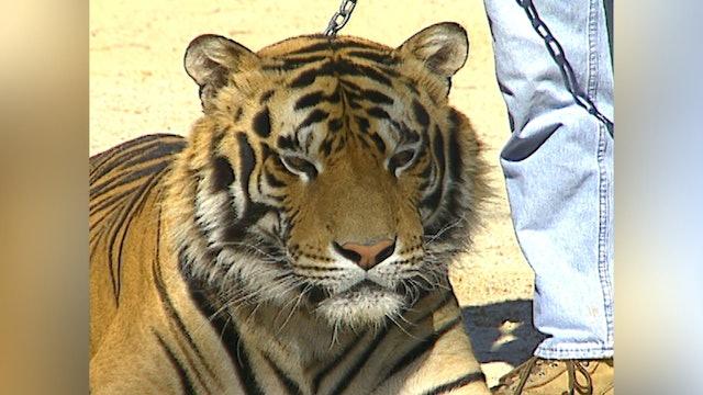 302: Exotic Animal Trainer