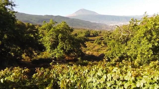 Tenerife Blue Trail 2019