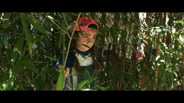 The Child In The Bamboo