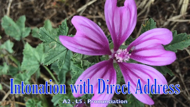 A2.L5 Intonation with Direct Address Pronunciation