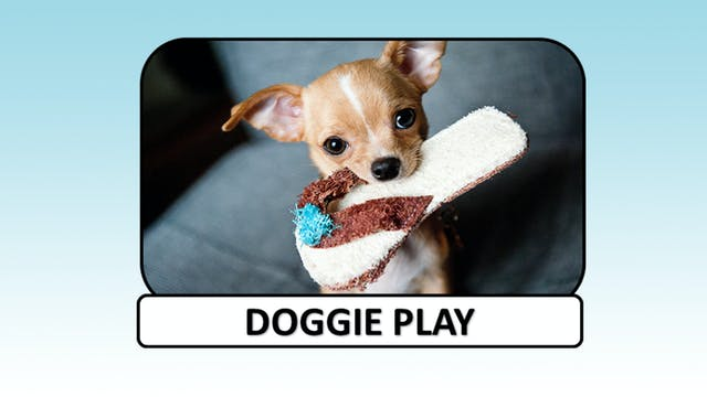 Doggie Play