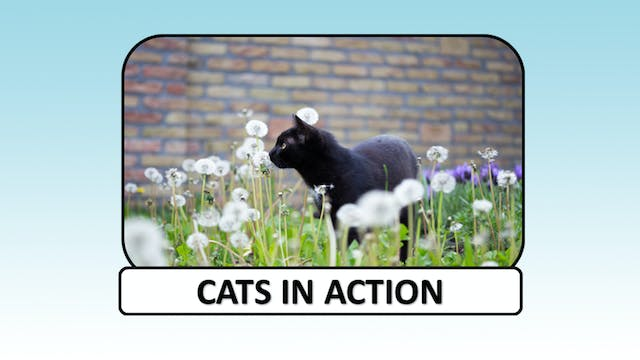 Cats in action