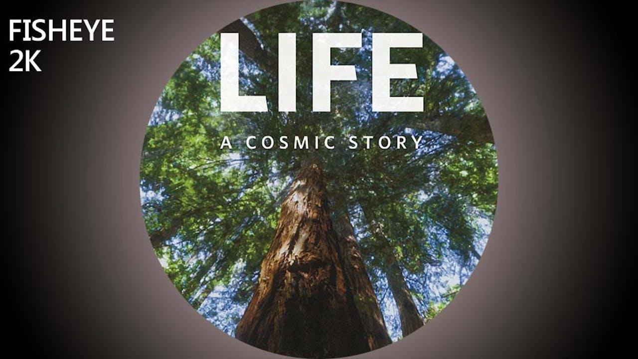 Life: A Cosmic Story - 2k - week