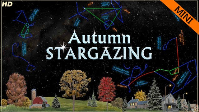 SSG autumn mini - HD