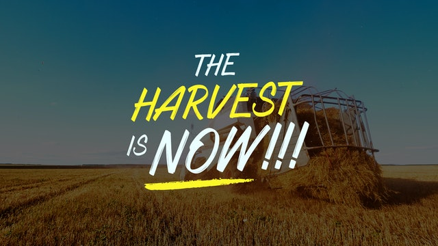 The Harvest is NOW