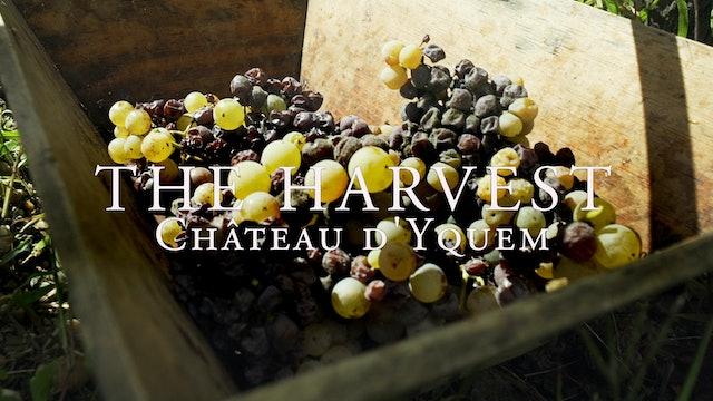 Harvest Episode 2: Château d'Yquem