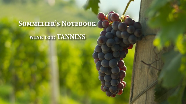 An Intro to Tannins