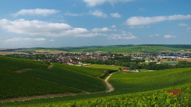 Full Version: The Beauty of Wine Regions