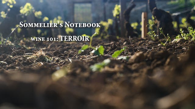 An Intro to Terroir