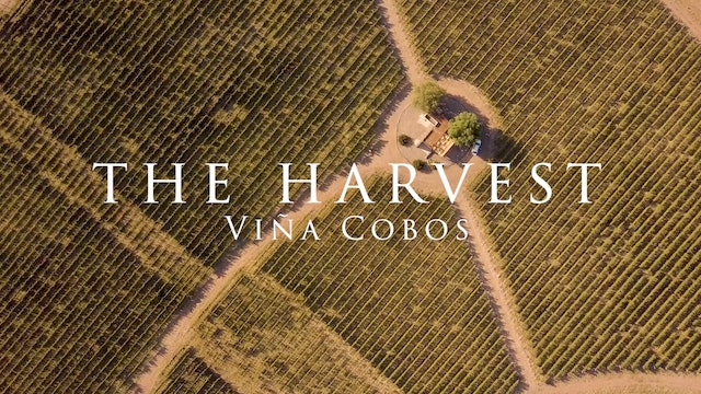 Harvest Episode 4: Viña Cobos