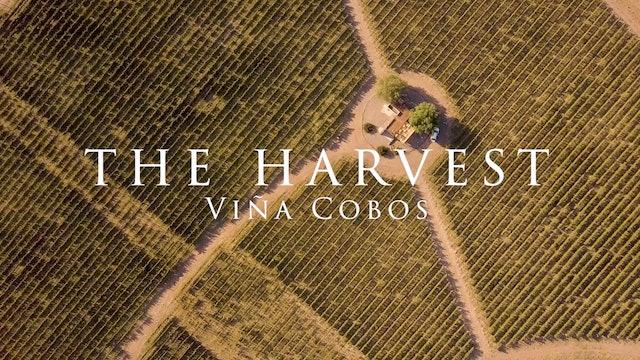 Harvest Episode 4: Viña Cobos