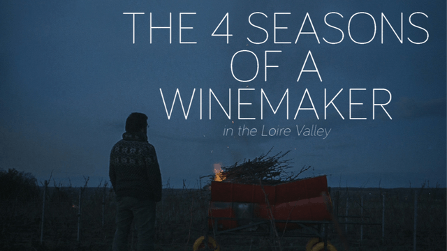 The 4 Seasons of a Winemaker