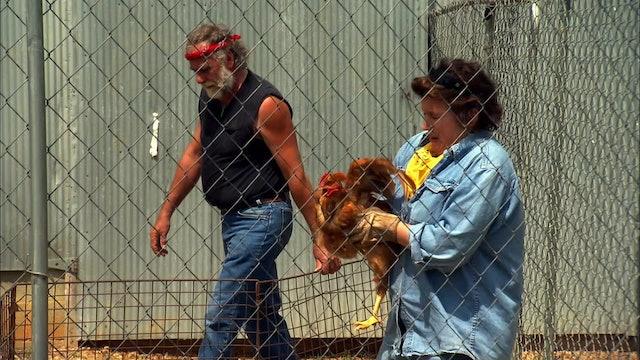 Pitchin' In: Chicken