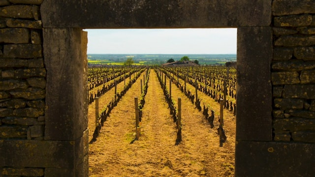 Travel to Burgundy with SOMM TV