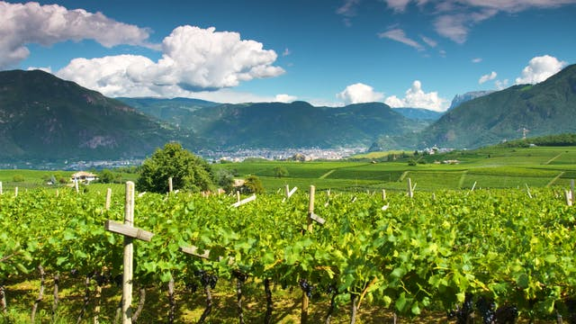 The Beauty of Vineyards Captured in T...