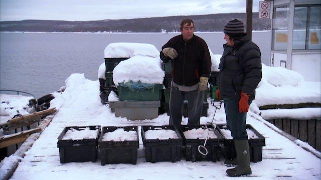 Pitchin' In: Whitefish