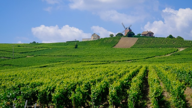 The Beauty of Champagne France