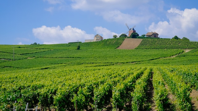 The Beauty of Champagne, France