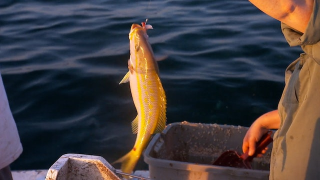 Pitchin' In: Yellow Tail Snapper