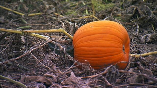 Pitchin' In: Pumpkin