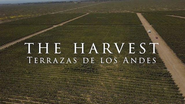 Harvest Episode 5: Terrazas de los Andes