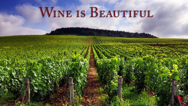 Wine is Beautiful