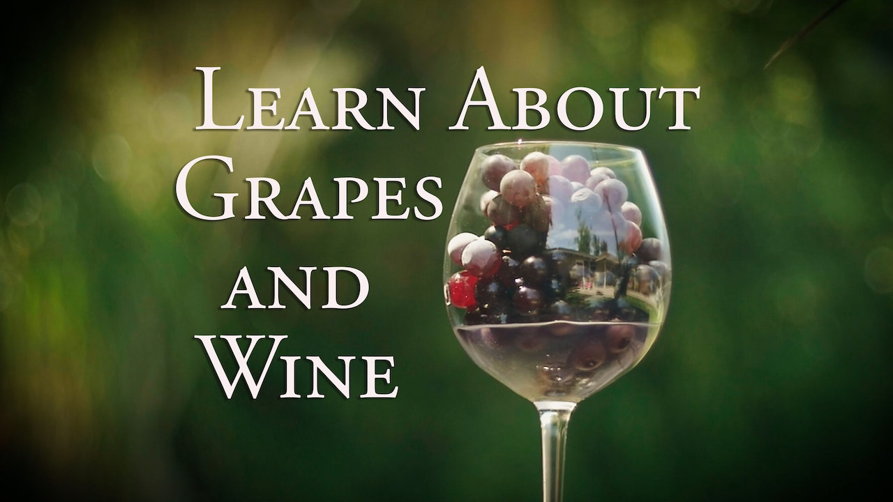 Learn about Grapes and Wine