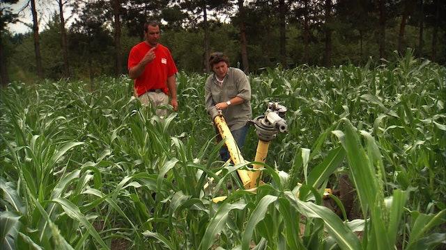Pitchin' In: Sweet Corn