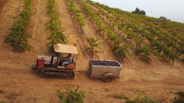 Harvest Episode 7: Ridge Vineyards