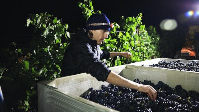 Harvest Episode 3: Raen Wine