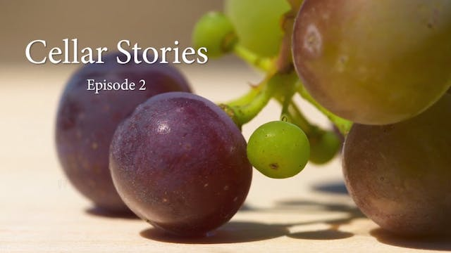 Cellar Stories Episode 2 | The Lost V...