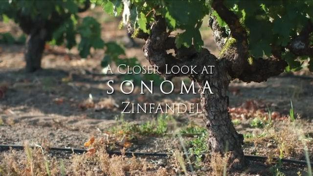 A Closer Look at Sonoma Zinfandel