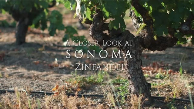 A Closer Look at Sonoma Zinfandel