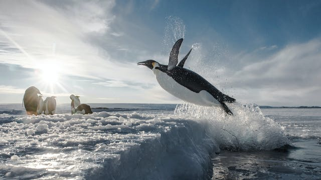 Antarctica: In the Footsteps of the E...