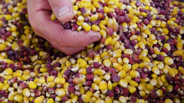 Le Petit Tour: Polenta and Corn (Sn 1 Ep 3)