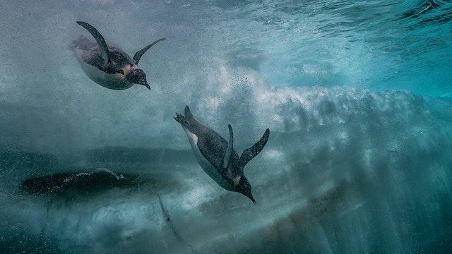 Antarctica: Antarctica's Secrets (Sn 1 Ep 1)