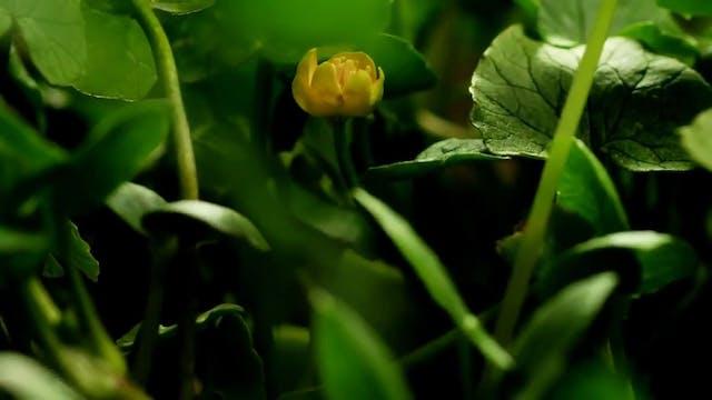 Amazing Nature Full HD 1080p -Time Lapse