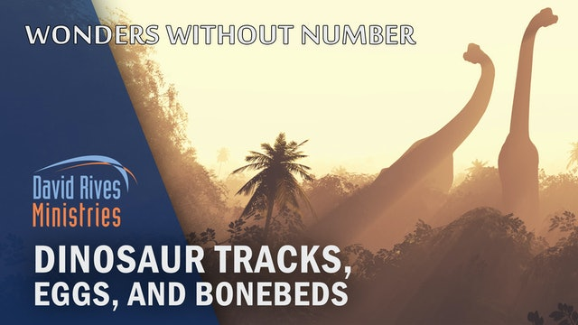 Dinosaur Tracks - Michael Oard and David Rives
