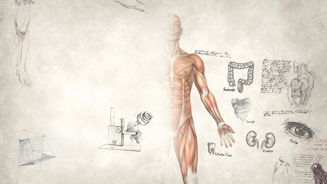 Ep. 22 Study Guide - Vestigial Organs